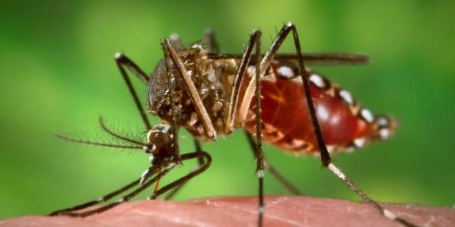 Redução de áreas verdes beneficia proliferação de mosquitos transmissores de doenças