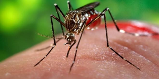 Pequenas empresas desenvolvem novas estratégias de combate ao vírus Zika