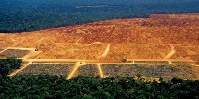 WWF: aumenta a pressão sobre o desmatamento