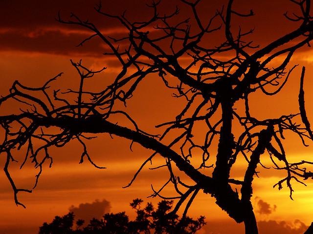 Desmatamento no Cerrado foi maior do que o da Amazônia em 15 anos