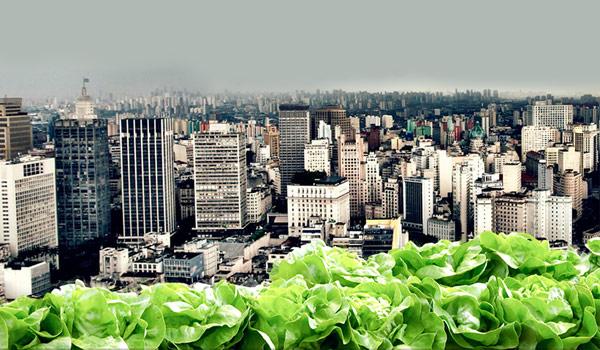 Projeto de Lei prevê criação da Política Nacional de Agricultura Urbana