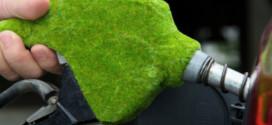 Enzima vegetal pode aumentar produção de biocombustível