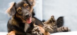 Rações para cães e gatos poderão receber isenção tributária