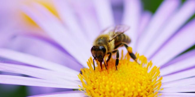 Especialistas discutem perda de abelhas no Brasil