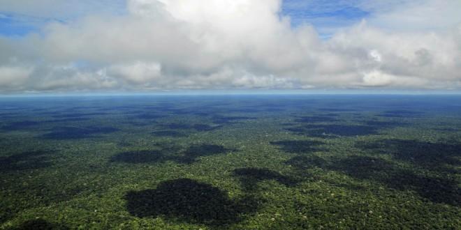 Novo estudo aponta aumento na cobertura global de árvores