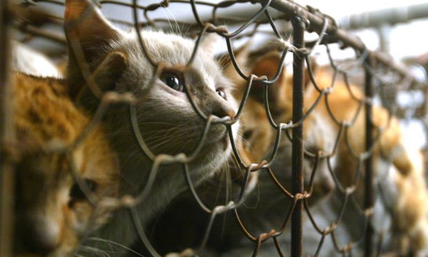 Taiwan é o primeiro país asiático a proibir o consumo de carne de cão e gato
