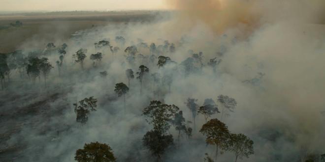 Poluente emitido pela queima de biomassa causa dano severo em células do pulmão humano