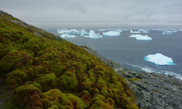 Mudanças climáticas estão tornando a Antártida verde