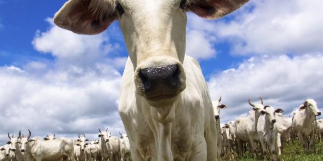 WWF-Brasil apoia curso de bem-estar animal