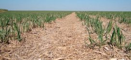 Conversão de pastagem em lavoura de cana aumenta emissões de gases de efeito estufa