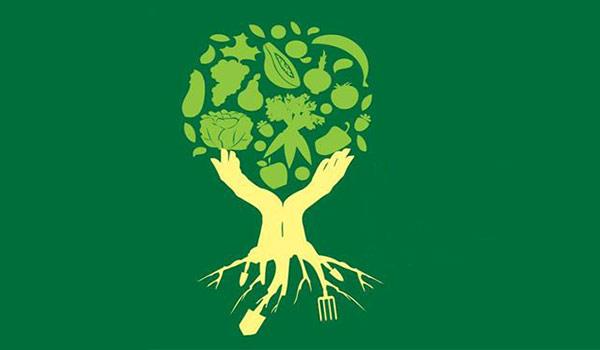 SOS Mata Atlântica promove atividades ambientais gratuitas em dia na fazenda