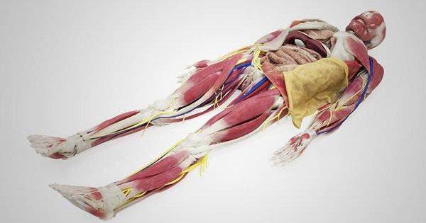Nova tecnologia elimina sacrifício de animais e uso de cadáveres em cursos de medicina