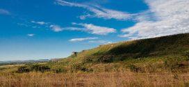 Estudo diz que uma vez degradado, o Cerrado não se regenera naturalmente