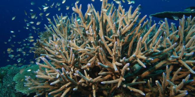 Protetor solar pode contribuir para destruição dos recifes de coral, alertam especialistas