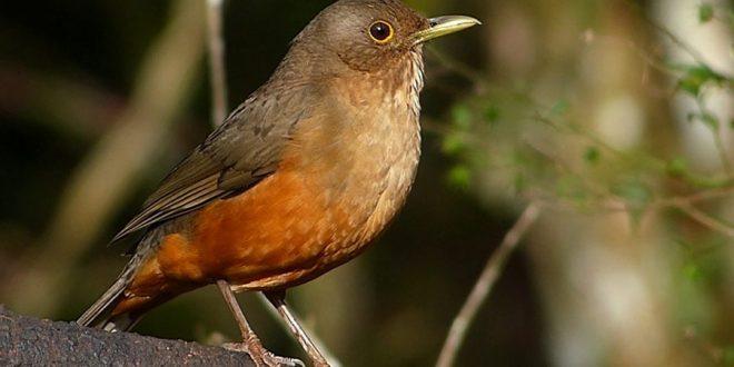 Museu da Energia promove observação de aves no Jardim da Luz