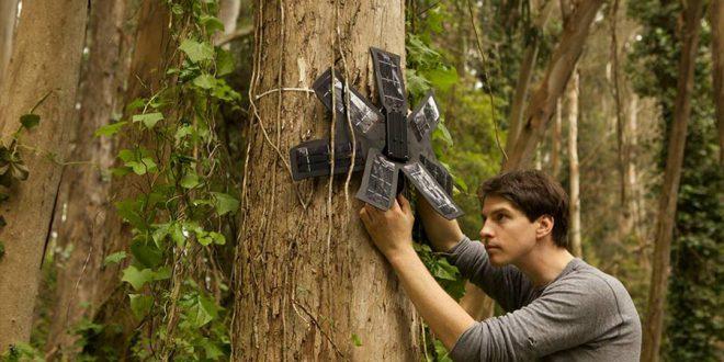 Celulares em árvores da Amazônia ajudam a combater desmatamento
