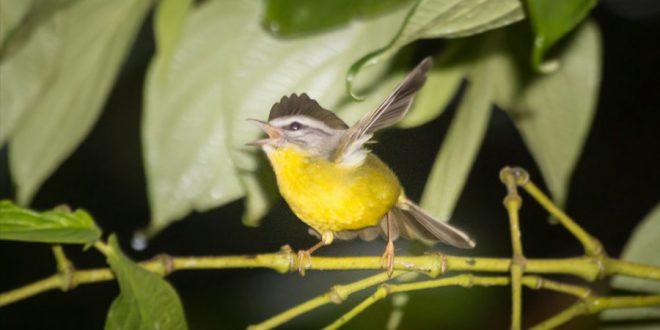 Instituto Butantan recebe maior feira de observação de aves da América Latina