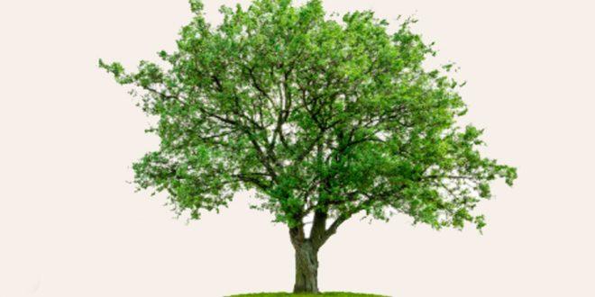 Maioria dos consumidores quer produtos que sigam o Código Florestal, diz pesquisa