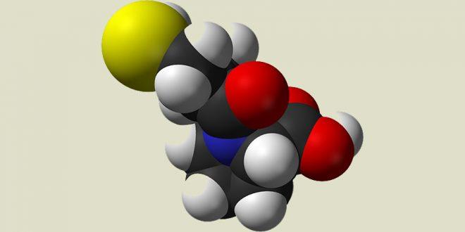 Enzima que converte biomassa em bioprodutos é identificada