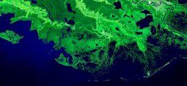 Parceria entre ONU e Google cria plataforma para mapear ecossistemas
