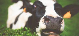 Empresas de carne e laticínios superam indústria de petróleo como maiores poluidoras do mundo