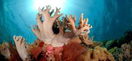Inteligência Artificial identifica recifes de corais resistentes às mudanças climáticas