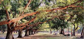 Árvores revelam evolução da poluição ambiental em São Paulo