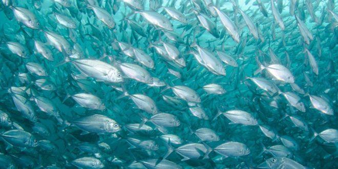 Startup que cria carne de peixe em laboratório recebe investimento milionário