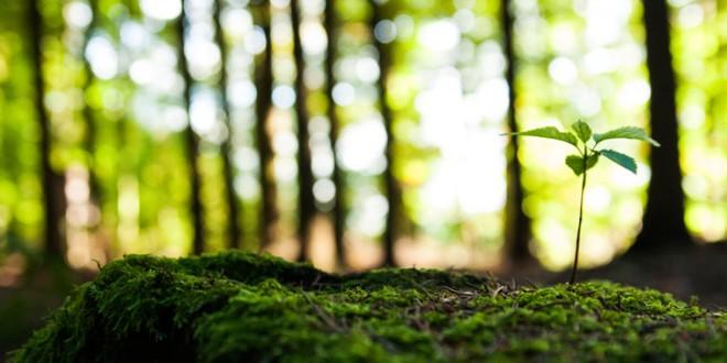 UFSCar recebe inscrições para V Curso de Verão na área de Ecologia