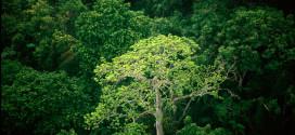Brasil destaca fiscalização e regularização ambiental na abertura da COP 24