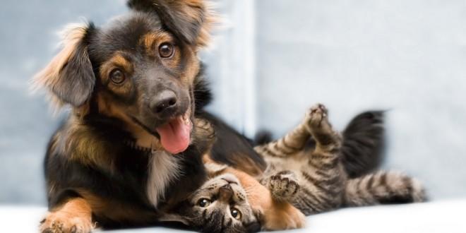 MorumbiShopping promove 4º evento de adoção de animais em parceria com Instituto Luisa Mell