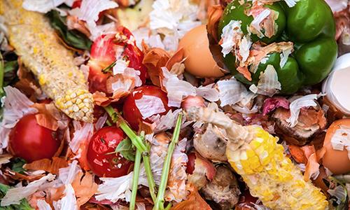91% da população mundial não percebem que sistema alimentar ameaça natureza
