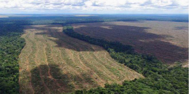 MT: nova técnica de monitoramento por satélite identifica desmatamento ilegal de 2,6 mil hectares