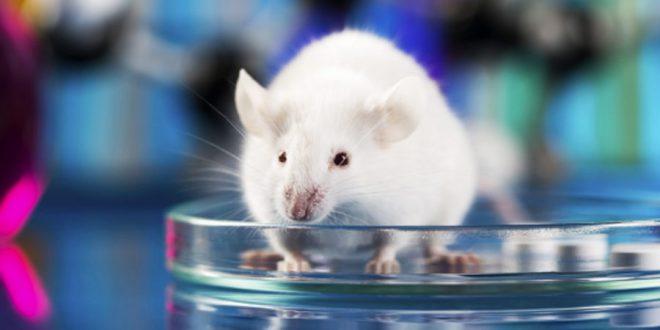 Pesquisa da UL aponta que Inteligência Artificial é mais eficiente que testes com animais em laboratório