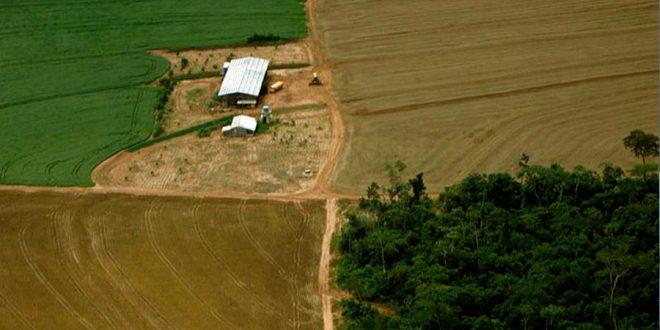 Desmatamento é 2ª maior causa das mudanças climáticas, revela FAO