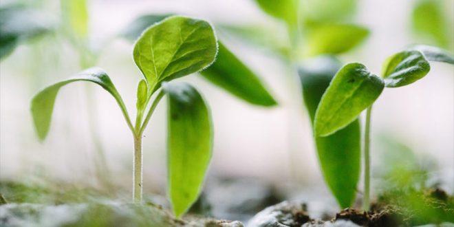 Sistema B reúne empresas que aliam lucro a preocupação socioambiental