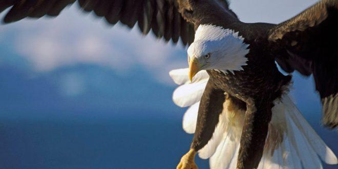 Pesquisa revela que 52% das populações de aves de rapina do mundo estão em declínio