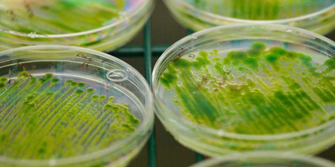 Algas mostram para cientistas como é possível sobreviver às mudanças climáticas