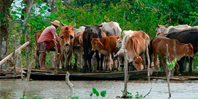 Pesquisa indica aumento das enchentes do rio Amazonas