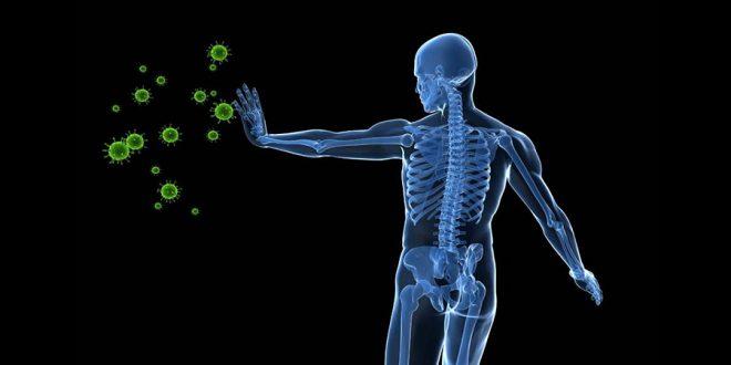 Projeto pretende retardar o envelhecimento do sistema imune humano