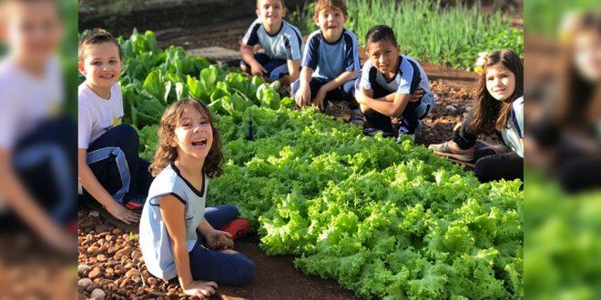 Programa 'Crianças Saudáveis, Futuro Saudável' registra 252 mil pessoas beneficiadas