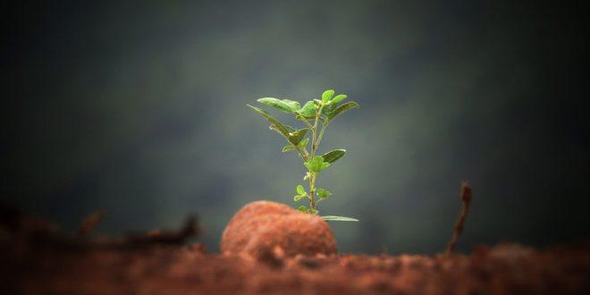 Papel Semente: empresa cria produto que ao ser descartado se transforma em planta